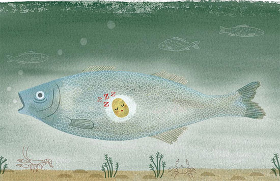 Fish illustration by Romina i Morad  IB Flickr group picks: Sweet animals will conquer the world!